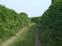 An_overgrown_lane_-_geograph_org_uk_-_193225