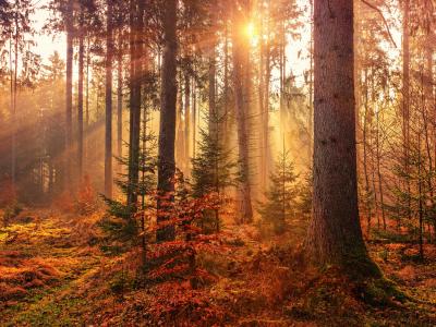 autumn, nature, leaves