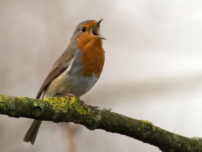 bird, nature, environment