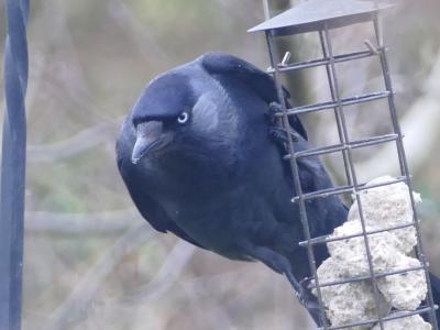 Birds in garden2