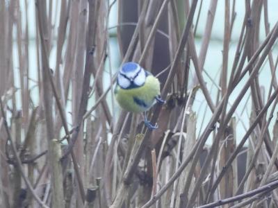 Birds in garden3