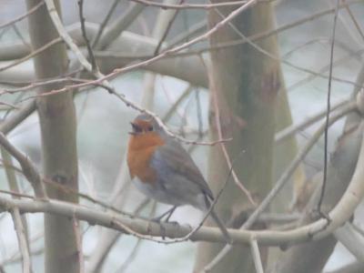 Birds in garden5