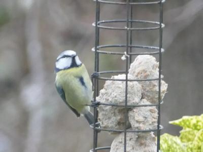 Birds in garden6