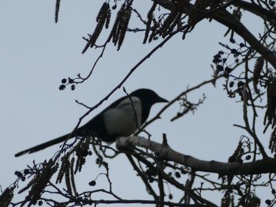 Birds in garden7