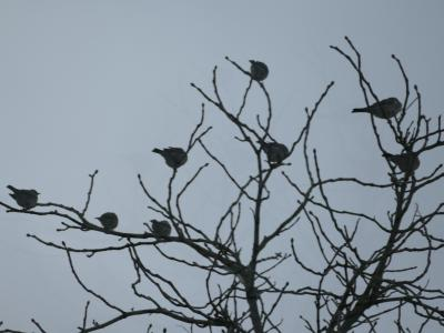 Birds in garden8
