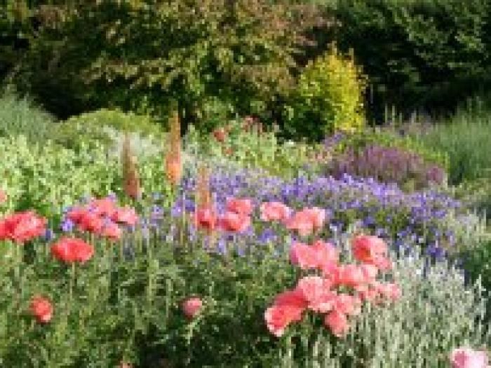 Bluebell Cottage Gardens-header