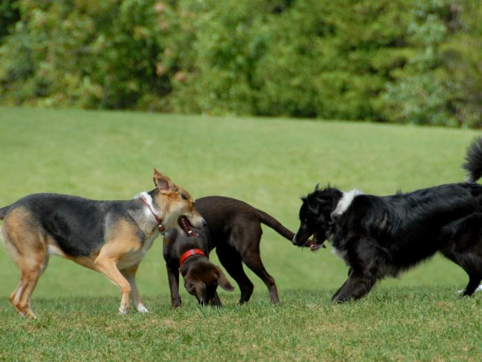 dog-park