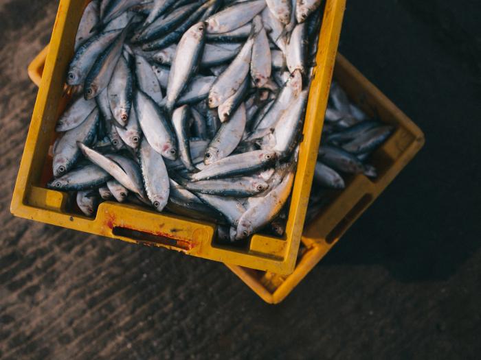 fish, environment, nature