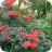 Garden Flowers 23 May 2016-jpg (2)
