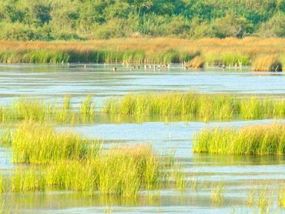 Greek island wetlands