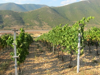 Greek vineyard on Kefalonia