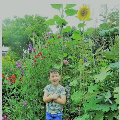 Harry Wallis sunflower2