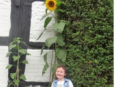 Holly Wallis sunflower2