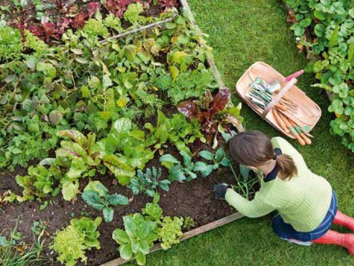 Kitchen Garden- produce a feast - Alan Titchmarsh