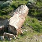 lesvos petrified forest