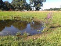 Newt pond 1