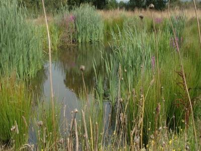 Newt Pond Today Landscape