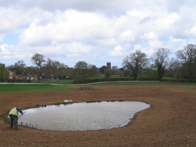 Newt ponds