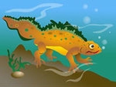 newt1