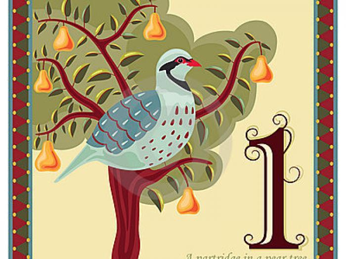 Partridge pear tree