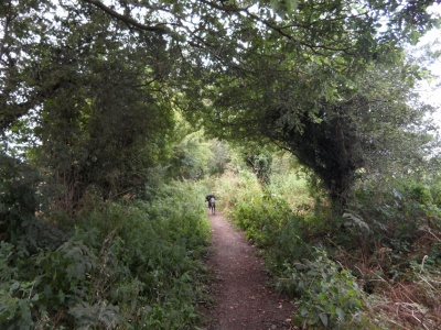 path and dogs1