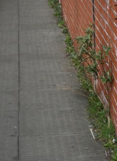 pavement_weeds_CPB