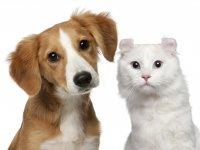 pet-dog-cat