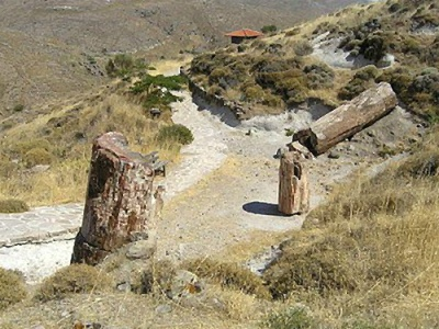 Petrified forest on Lesbos