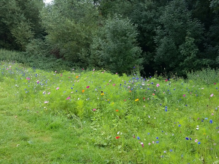 Pryors Hayes Wild Flower Planting behind 14th green