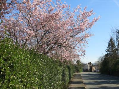 Springtime in Tarvin Img_5541