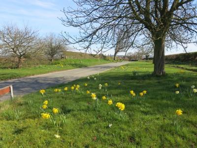 Springtime in Tarvin Img_5545