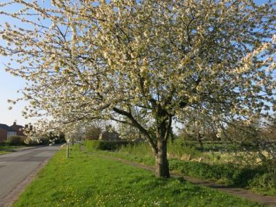 Springtime in Tarvin Img_5589