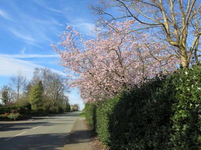 Springtime in Tarvin Img_5539