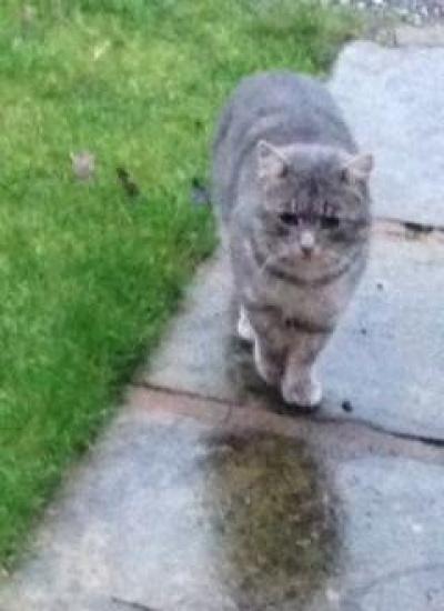 Stray cat--