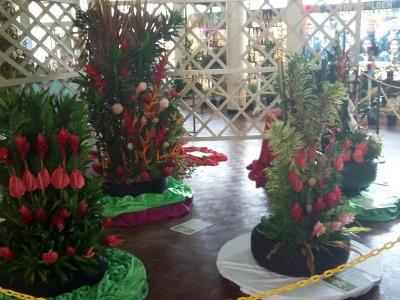 Suva Flowers 5
