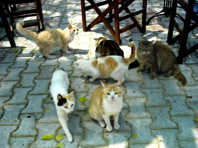 Taverna cats are common in Greece