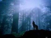 wolves-web