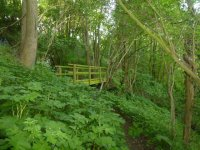 Wooden_Foot_Bridge_On_The_Woodland_Walk