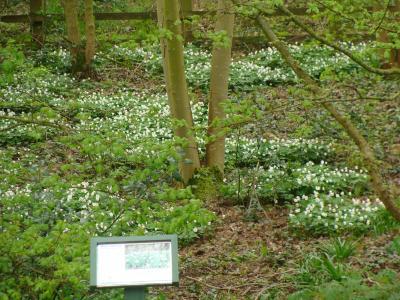 Woodland Signage (4)