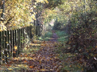 Woodland walk (autumn 2)