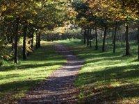 Woodland walk (autumn)