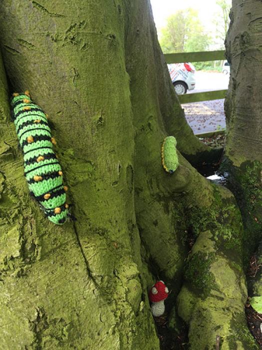 Woollen Wood - caterpillar_large